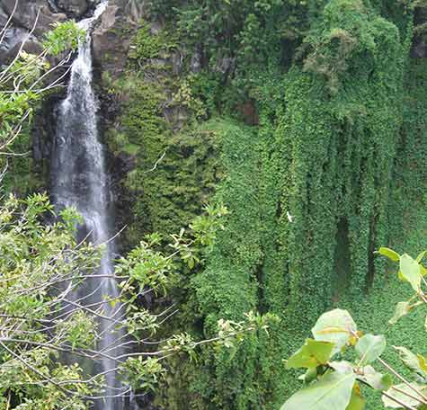 Relax for a picnic next to a jungle waterfall while hiking the bamboo forest on Maui.