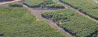 An aerial above Kaanapali coffee farm in West Maui.