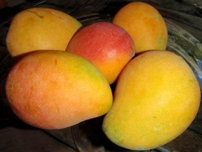 Fresh mangoes for apple mango trifle recipe.