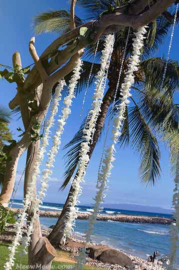 Fresh flower lei hanging on the wedding chuppah at the Olowalu Plantation House in West Maui.