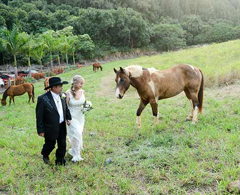 A country wedding on Maui with the couple walking in the ranch pasture with horses.