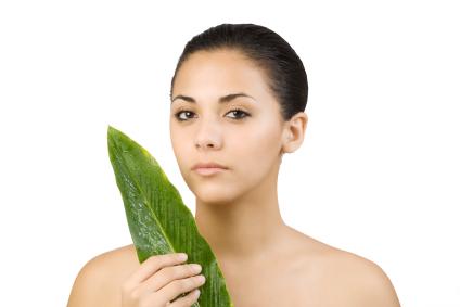 Ti Leaf is used in Hawaiian traditional weddings and Hawaii weddings often includes ti leaf ceremonies.